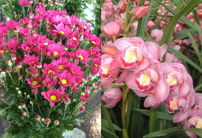 Cymbidium & Small Chrysanthemum