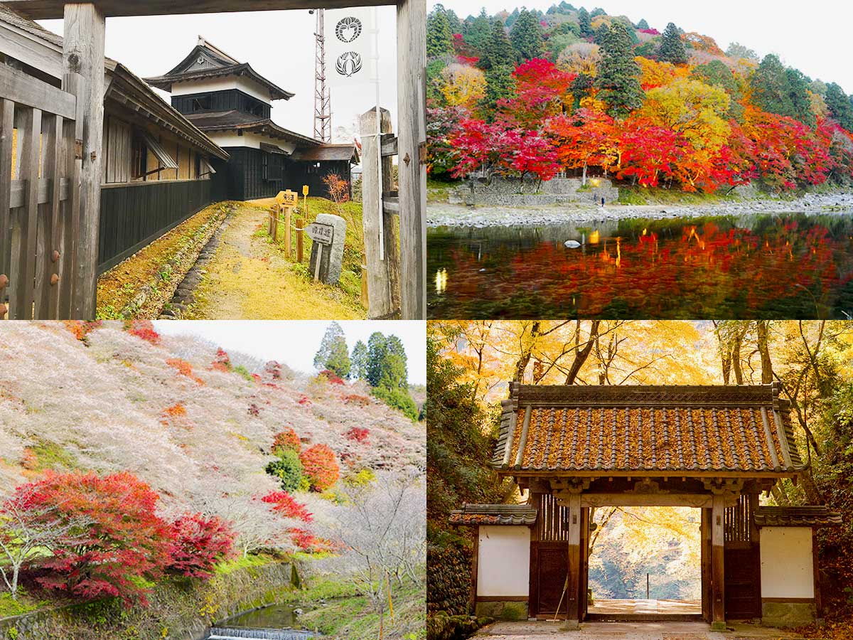 Autumn In Toyota City's Stunning Korankei Gorge and the Twice-a-Year Blooming Cherry Trees of Obara